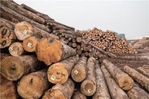 美国木材价格三个月暴跌70%2021年下半年木材价格市场走势